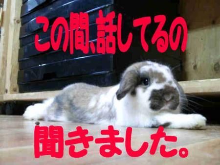 小五郎からのお知らせ 3