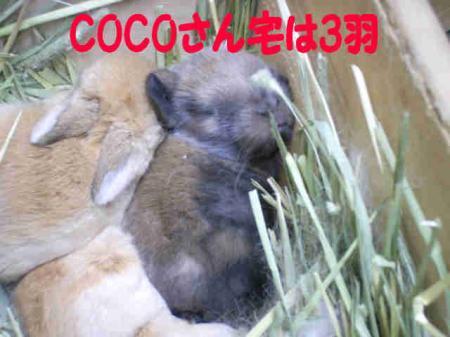 COCO_20081205193746.jpg