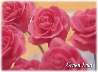 baraaa_20110127150505.jpg