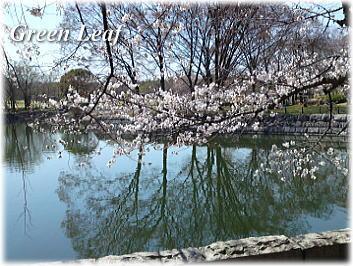 sakuraab_20110406100135.jpg