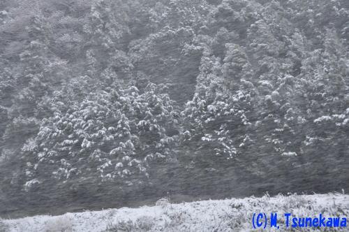 各務原雪景色