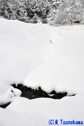 金華山雪景色2