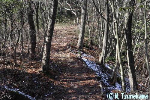冬の雑木林(岐阜県関市)