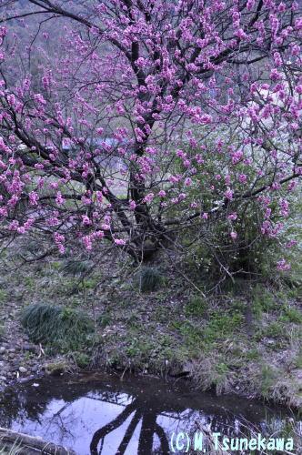 達目洞の春1