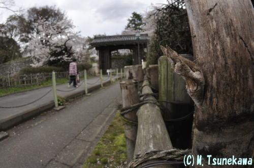 名古屋城とアゲハのサナギ