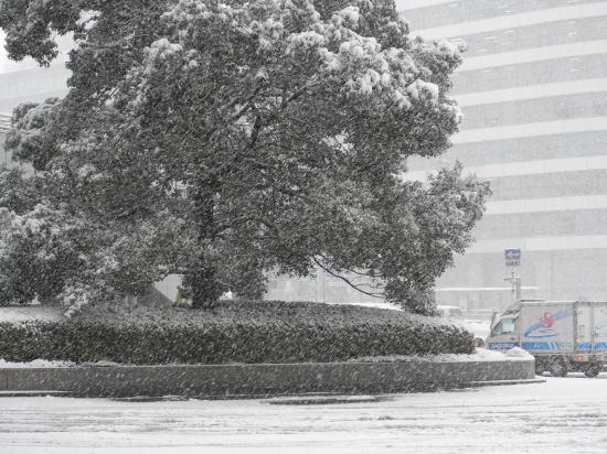 120202nagoya snowy day0015667