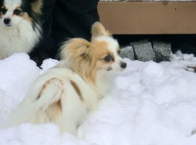 雪に埋まるアリス