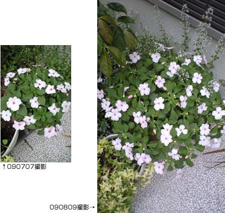 misakichi090810_01.jpg