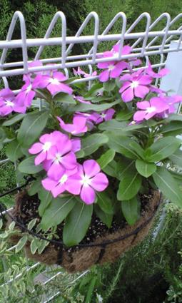 misakichi090810_3.jpg
