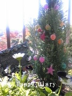 2008年クリスマスガーデニング3