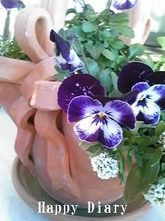 リボンの鉢のビオラ