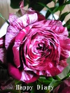 青山フラワーのバラ