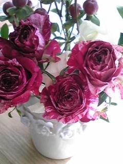 青山フラワーのバラ2