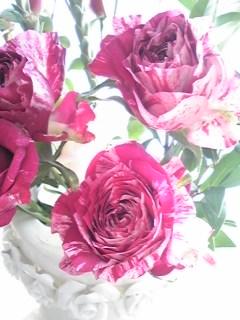 青山フラワーのバラ4