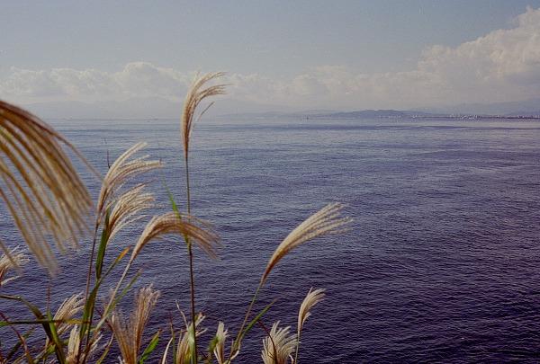 2010.11江ノ島yashika35GL017