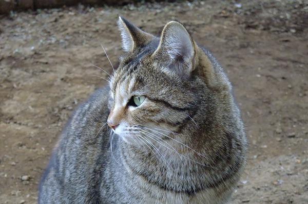azuki20110213037.jpg
