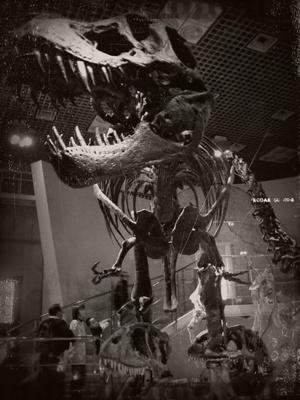 101 恐竜1