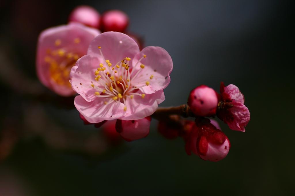s-護国神社20110226 032