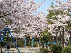 sakura_hiraisakura.jpg