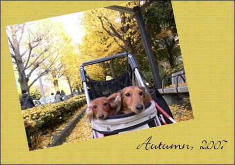 昨年の駒沢公園