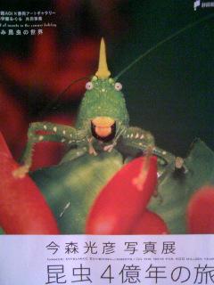 昆虫写真展チラシ