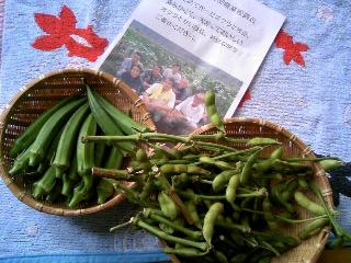 オクラと枝豆