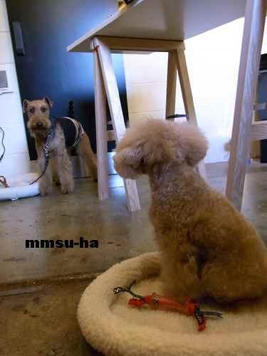 mmsu-ha3_20101204014113.jpg