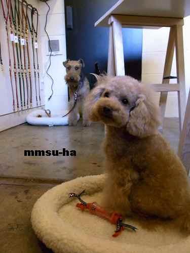 mmsu-ha4_20101204014212.jpg