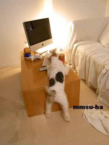 mumin8.jpg