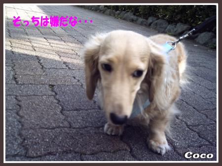 3dog1101-09.png