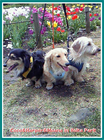 3dogs0419-01.png