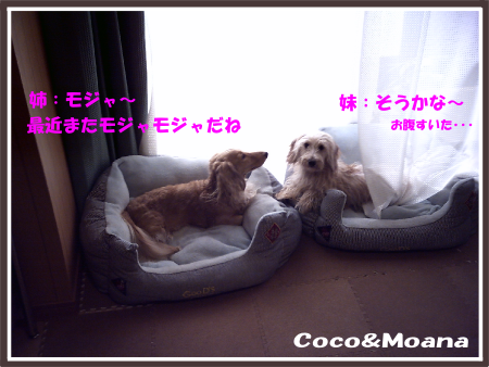coco0919-02.png
