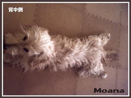 moa0918-02.png