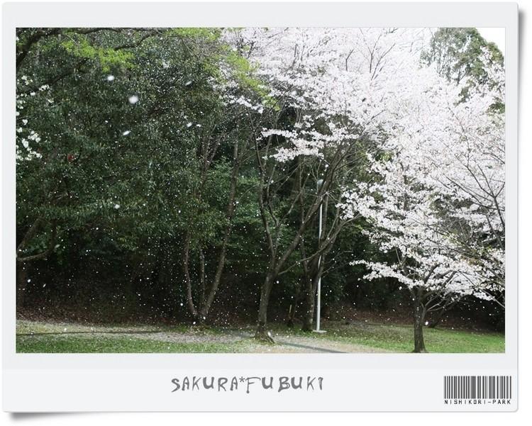 20110411-11.jpg