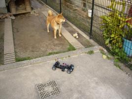 Mシャーシ&柴犬