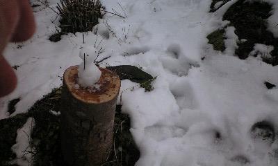 冬の庭14