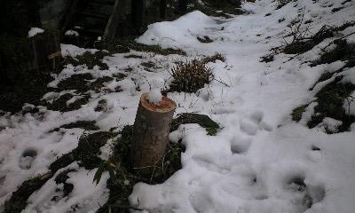 冬の庭15
