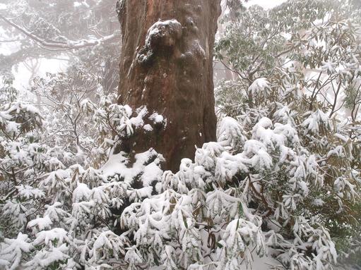 屋久島紀行(21) -屋久島に雪が降る-