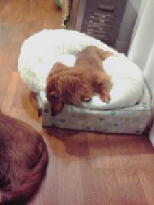 3段重ねの寝床でお休みモコ