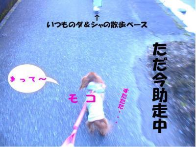 3わん散歩3canvas