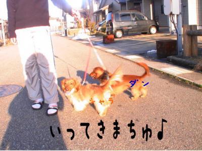 3わん散歩いってきまちゅcanvas