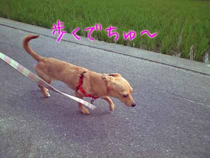 歩くでちゅ~
