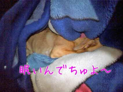 眠いんでちゅよ~