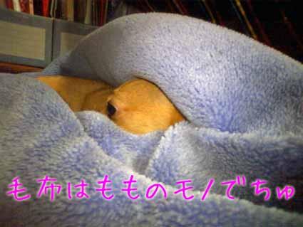毛布はもものモノ
