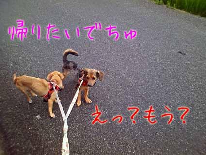 お散歩ですよ~