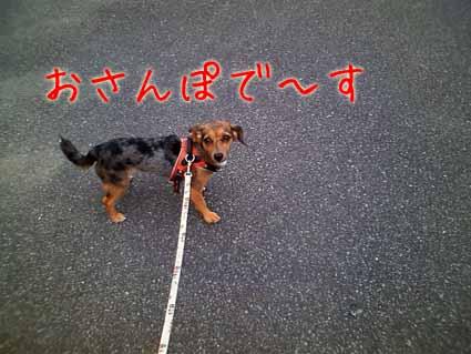 お散歩で~す