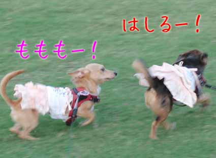 走るわんこ姉妹