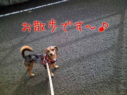 お散歩です~♪