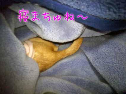寝まちゅね~
