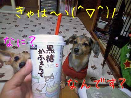 きゃは~ヽ(^▽^)ノ